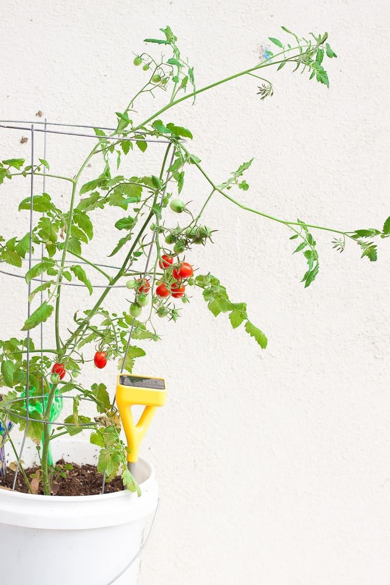 edyn sensor1 1. Build Your Own Patio Garden  Edyn Garden Sensor   Oh So Delicioso