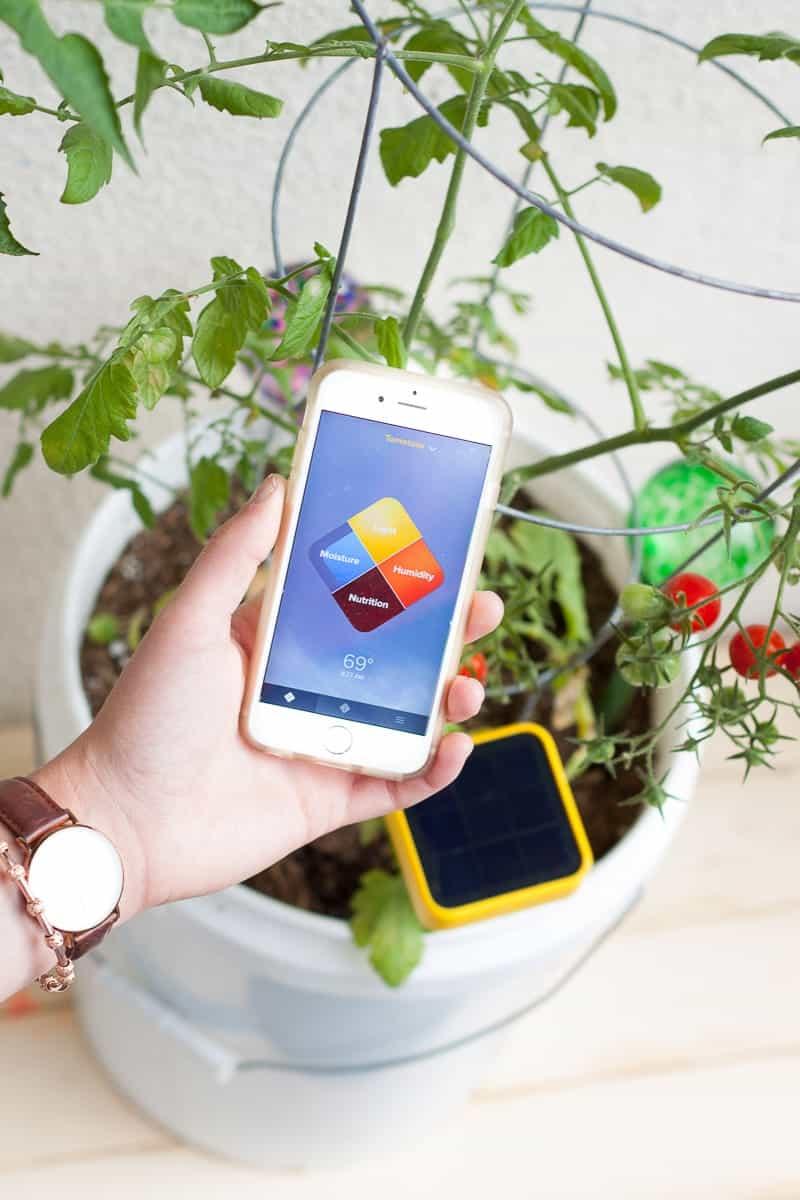 edyn sensor1 3. Build Your Own Patio Garden  Edyn Garden Sensor   Oh So Delicioso